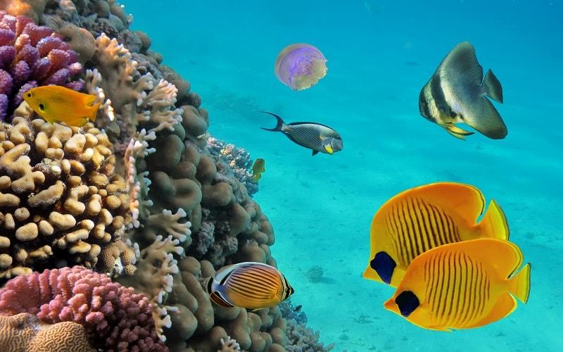 Bahamas Pauschal buchen