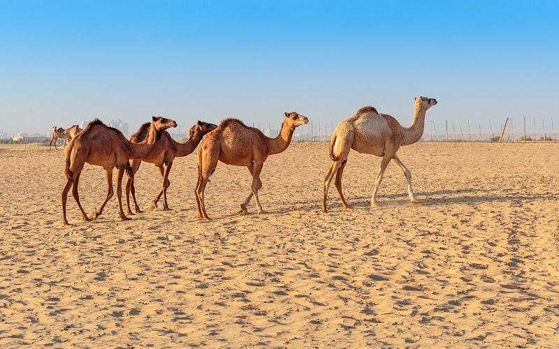 Pauschalurlaub Abu Dhabi