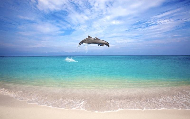 Pauschalurlaub Curacao
