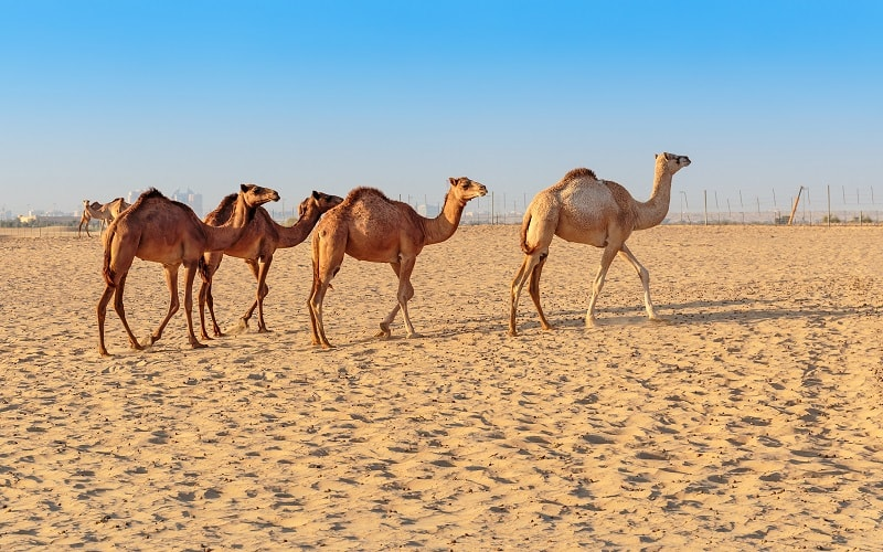 Vereinigte Arabische Emirate Urlaub buchen
