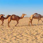 Tunesien Pauschalreise